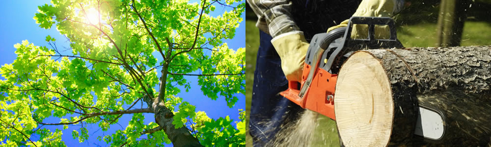 Tree Services Westerville